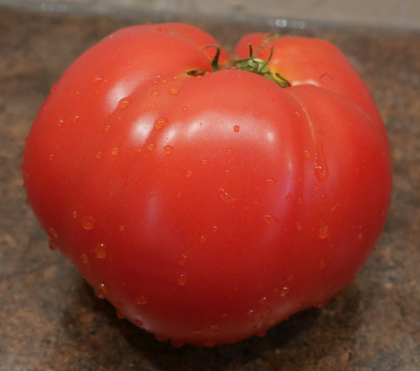 Fresh Red Ripe Tomatoes are available.