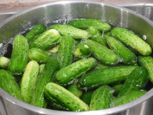 garlic dill pickles - cucumbers in brine